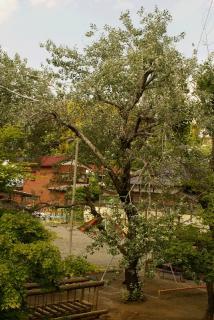 DSC08595樹木