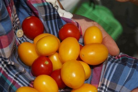 DSC00131トマト