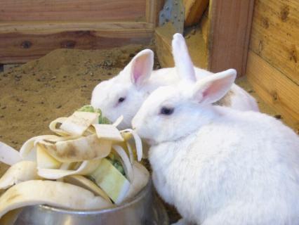 P1020991ウサギ