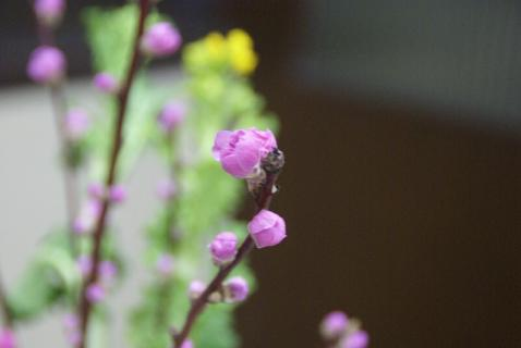 DSC00825桃の花