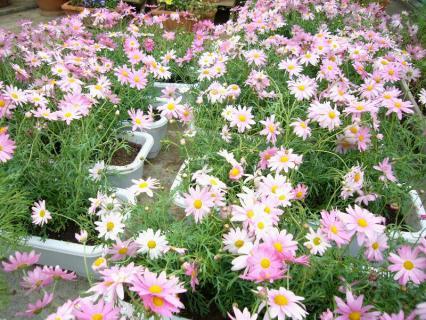 P1030709花