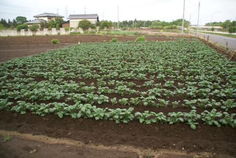 DSC01401畑2