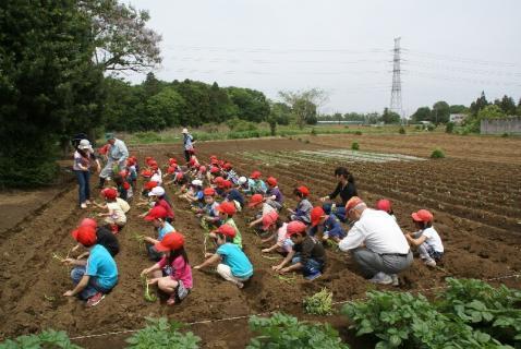 DSC01561芋10植える