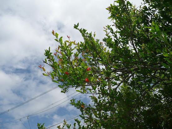 果樹 10,6,2 024