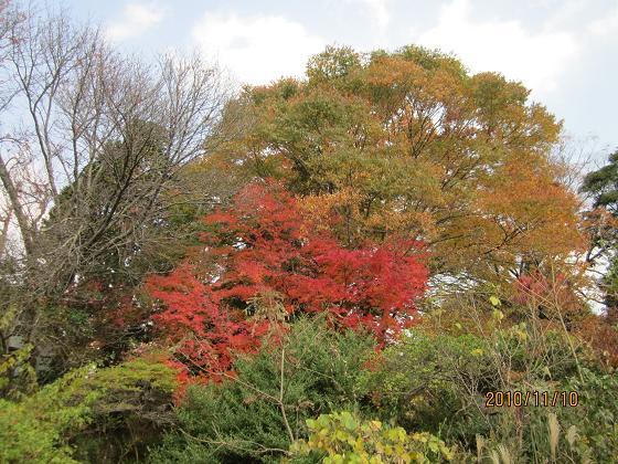 庭の紅葉 10,11,10 001
