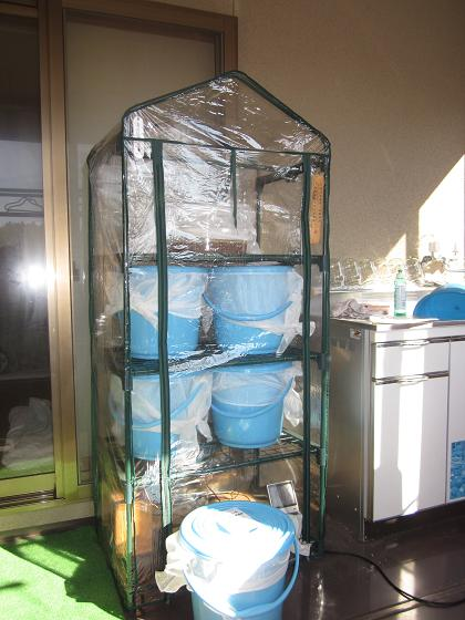 簡易温室で蜜垂らし 10,11,3 002