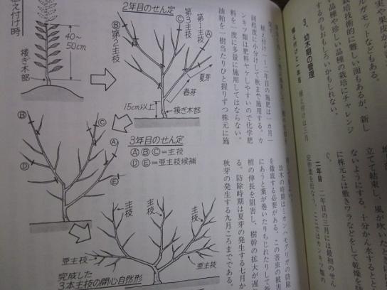 果樹の本 11,1,15 008