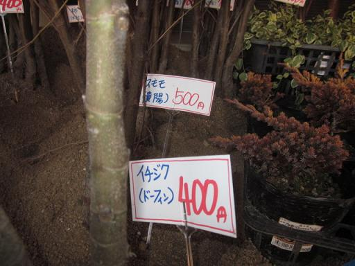 桃苗購入 コッコファーム 11,1,26 002