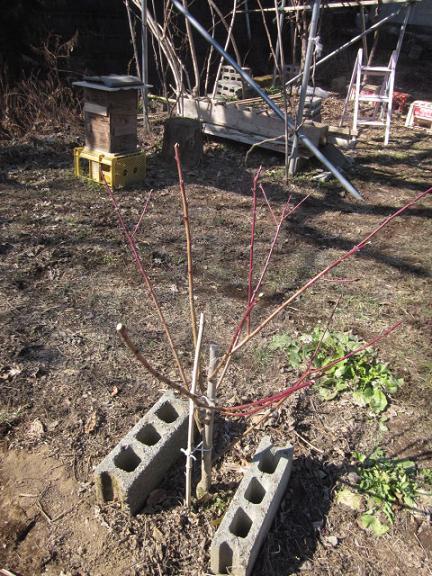 果樹剪定 11,2,1 006