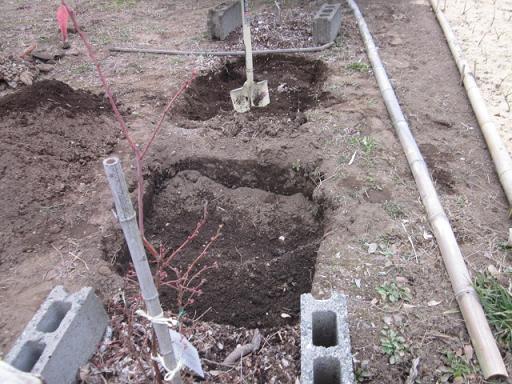 果樹用穴掘り 11,2,10 002