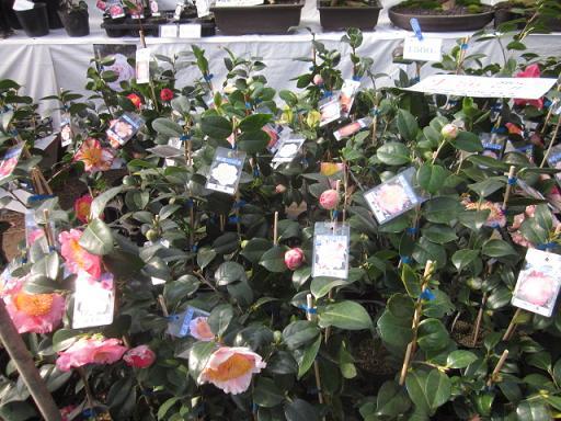 春の植木市 11,3,5 007