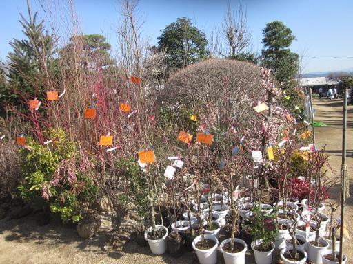 春の植木市 11,3,5 008