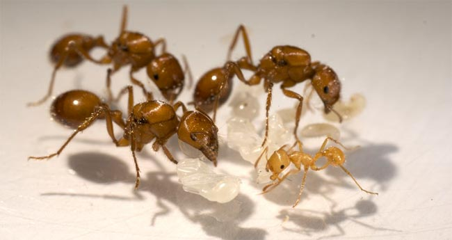 ants1_h1.jpg