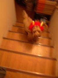 階段を駆け上がる鬼
