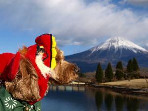富士山とヨハン2009
