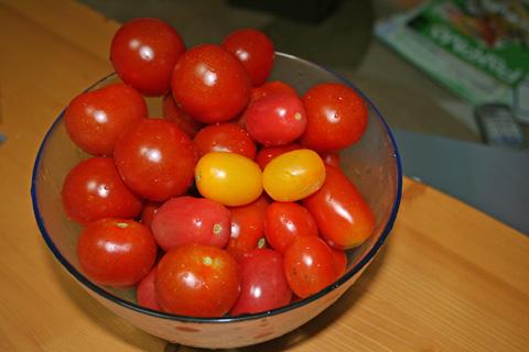 IMG_tomato818.jpg