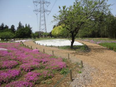 高崎自然の森公園 2