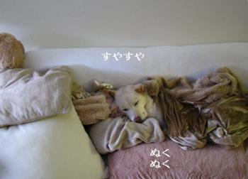 sleeping1215