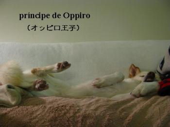 oppiroouji1216