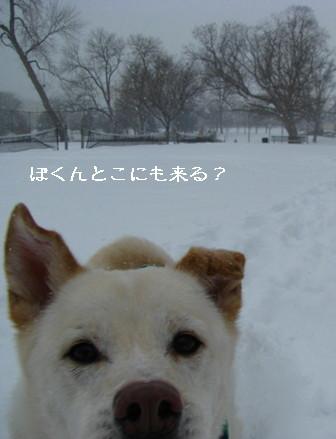 snowing1224