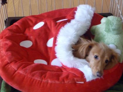 イチゴの寝袋~赤♪