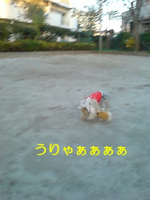 p20081113161224_01.jpg