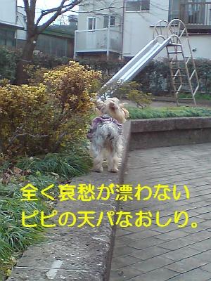 p20081213160025.jpg