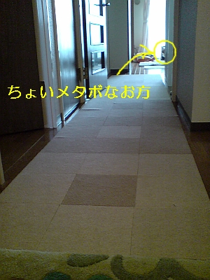p20090127141538.jpg