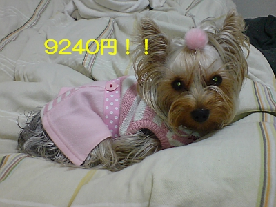 p20090204193021.jpg