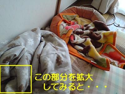 pp20090217141929.jpg