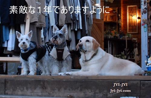 DSC_7341.jpg