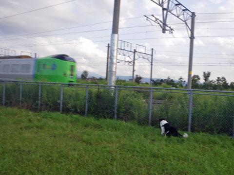 電車を追え~