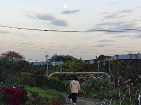早めの散歩