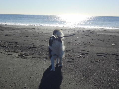 久し振りの海岸