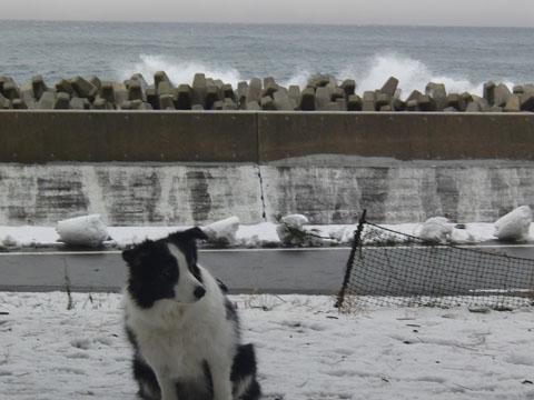 海が荒れてる