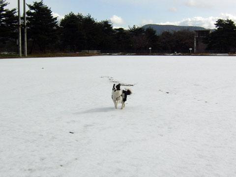 雪だ、うれしいな