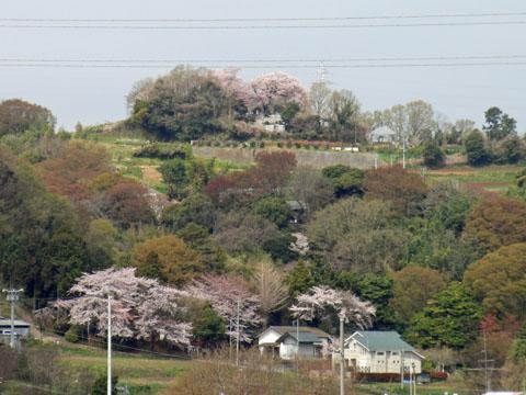 山の上に桜が