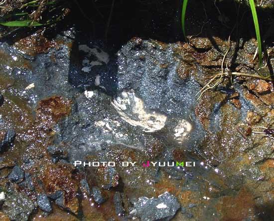 貝殻の化石ゲット