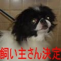 狆popoちゃんs