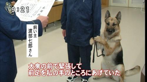 県警捜査嘱託犬クヴィレット・フォン・ワカミシンドー