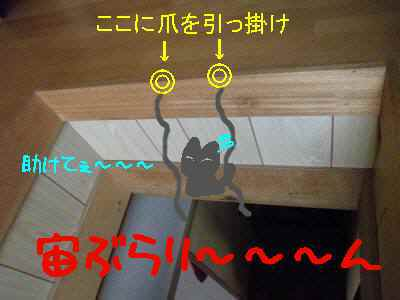 P4074373.jpg