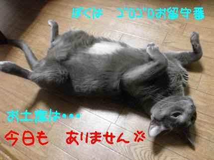 PC163575.jpg