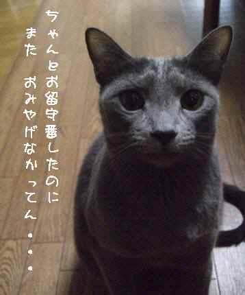 ku105511_20110610221317.jpg