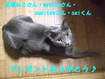 ku110916.jpg