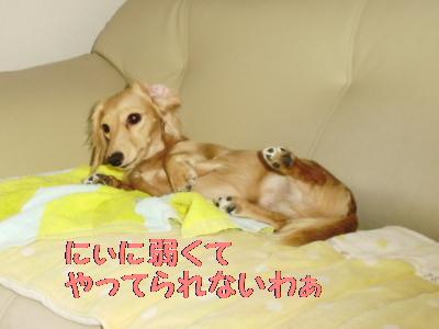 PA091333.jpg