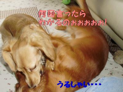 PA091343.jpg