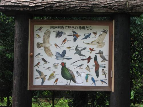 白州附近で見られる鳥たち