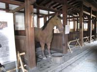 お馬が!! MOちゃん画像