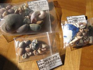 城ケ島で拾った貝殻