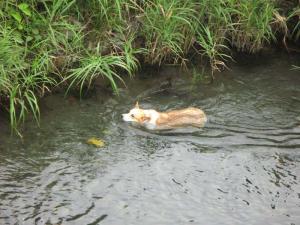 犬かき水かき